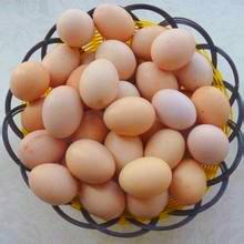 九寨沟藏花鸡土鸡蛋2元/个